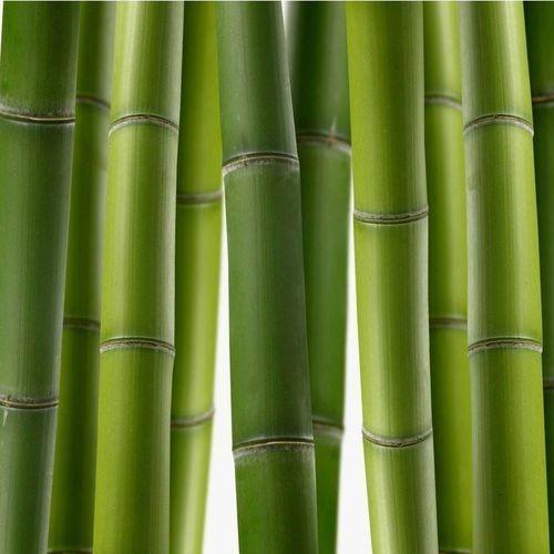 Wyprzedaż: fototapeta do kuchni bambus 02- 163x40cm - Folia Wall-Art, laminat połysk, Wally - piękno dekoracji z Wally - piękno dekoracji