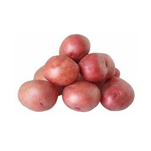 Świeże dystrybutor: bio planet s.a., wilkowa wieś 7, 05-084 leszno k. Opakowanie zbiorcze (kg) - ziemniaki czerwone świeże bio (polska) (około 10 kg)