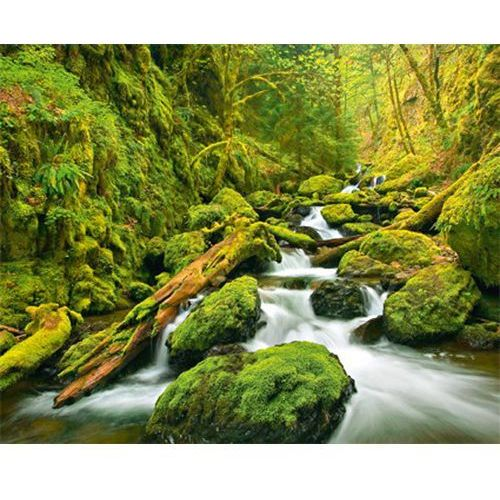 Fototapeta Wizard&Genius Green Canyon Cascades W 00909, Wizard & Genius z Decorations.pl