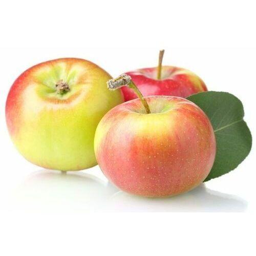 Świeże dystrybutor: bio planet s.a., wilkowa wieś 7, 05-084 leszno k. Opakowanie zbiorcze (kg) - jabłka świeże bio (bator-polska) (około 12 kg)