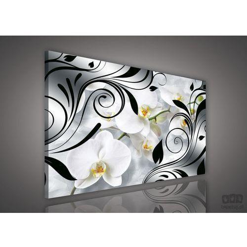 Consalnet Obraz czarne zdobienia pośród białych storczyków pp1513
