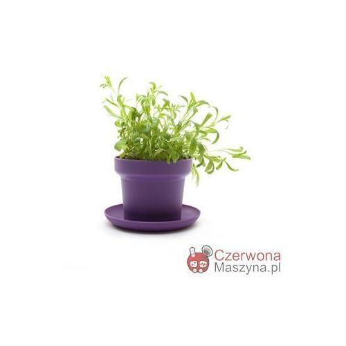 2 Doniczki na zioła Authentics Green fioletowe - oferta [15df642645f5b51c]