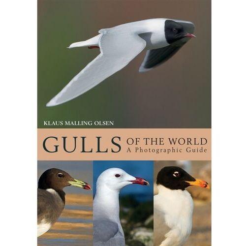 Gulls of the World (9781408181645)