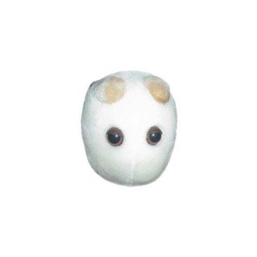 Drożdże piwne (Saccharomyces cerevisiae)