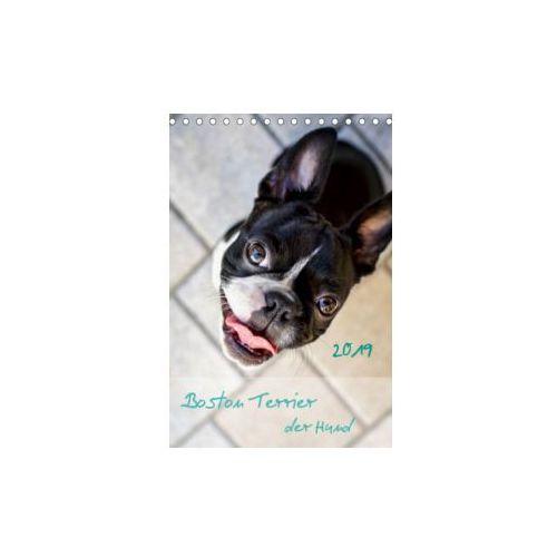 Boston Terrier der Hund 2019 (Tischkalender 2019 DIN A5 hoch)