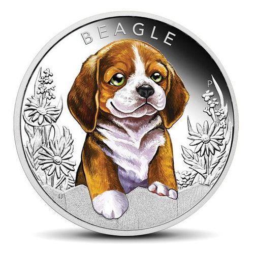 Srebrna moneta szczeniaki: beagle - wysyłka 24 h! marki Perth mint