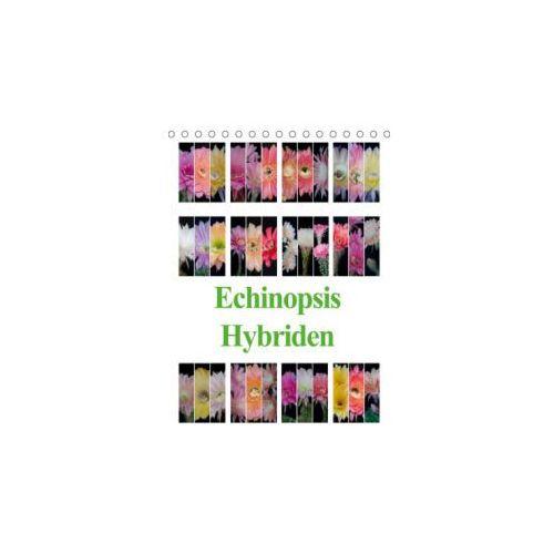 Echinopsis Hybriden (Tischkalender 2019 DIN A5 hoch) (9783669808323)