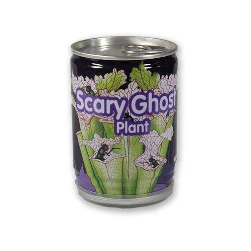 Muchołówka - żarłoczna roślina marki Giftworld