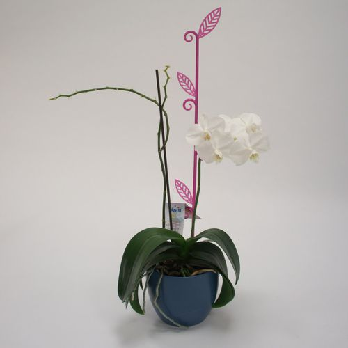 Pręcik do storczyków liść, przeźroczysty fiolet, 2 szt. - oferta [4534692f8535a512]