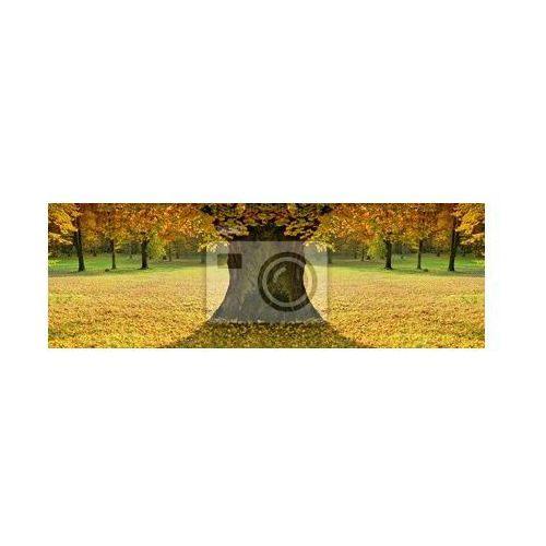 Obraz Piękny, kolorowy nastrój pani jesieni (przebranie i strój damski)