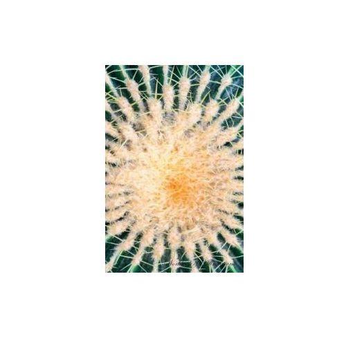 Golden Barrel Cactus Echinocactus Grusonii Workbook of Affirmations Golden Barrel Cactus Echinocactus Grusonii Workbook of Affirmations