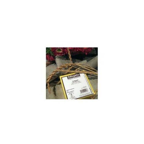 Galgant - siekany korzeń galgantu 100g