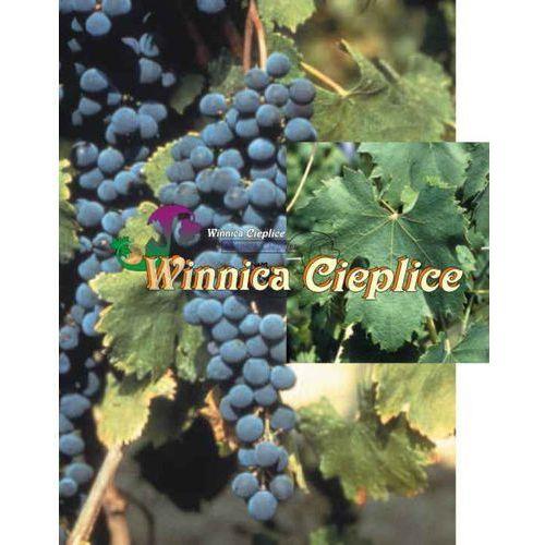 Sadzonki winorośli negretto marki Winnica cieplice