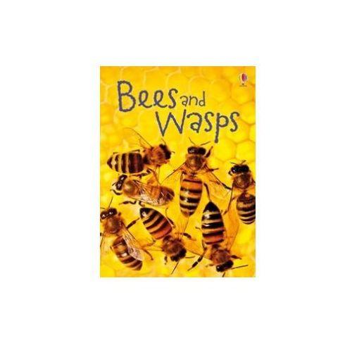 Bees & Wasps (9781409544876)