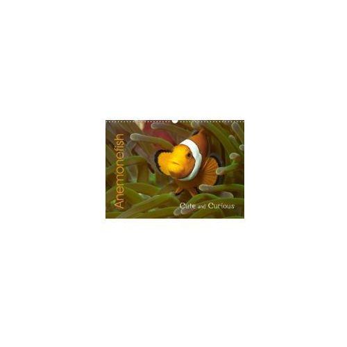 Anemonefish (Wall Calendar 2018 DIN A3 Landscape) (9781325318353)