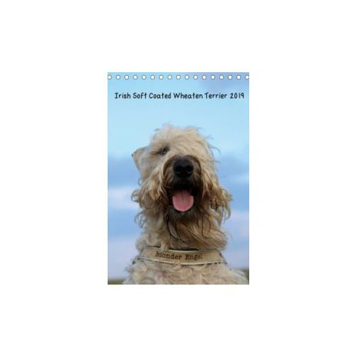 Irish Soft Coated Wheaten Terrier Kalender 2019 (Tischkalender 2019 DIN A5 hoch)