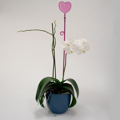 Pręcik do storczyków serce, przeźroczysty fiolet, 2 szt. - oferta [456ae1068122a542]