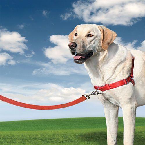 Szelki EasyWalk dla większych psów - mocna obroża