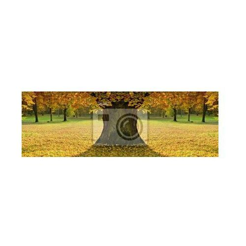 Obraz Piękny, kolorowy nastrój pani jesieni, produkt marki Redro
