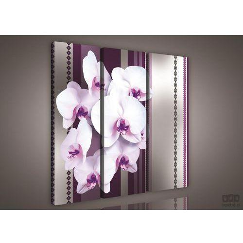 Obraz Biało-fioletowe storczyki PS827S6