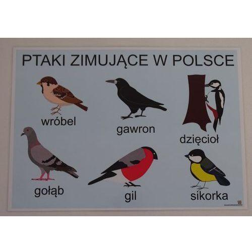 Bystra sowa Ptaki zimujące w polsce- plansza demonstracyjna