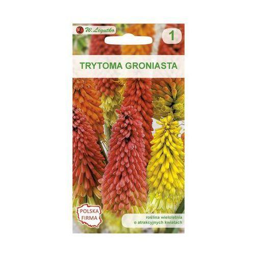 W. legutko Trytoma (knifofia) czerwono - żolta nasiona tradycyjne 0.1 g (5903837197019)