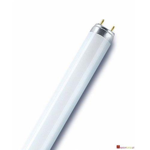 Oferta L 36/76-1 świetlówka liniowa T8 Osram