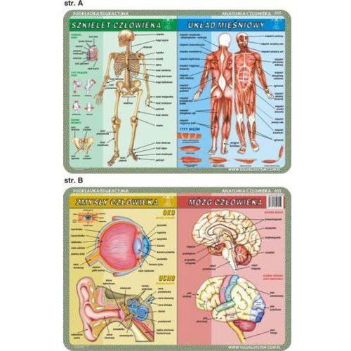 Anatomia człowieka i mikrobiologia - podkładki edukacyjne (3 szt.) - oferta [35caea0c516213ab]