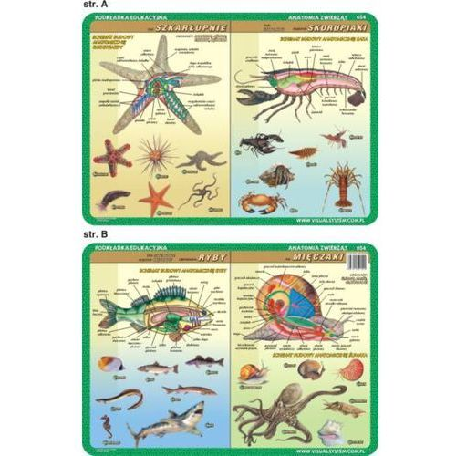 Anatomia zwierząt - podkładka edukacyjna nr 054 - oferta [355ddea55fd313f6]