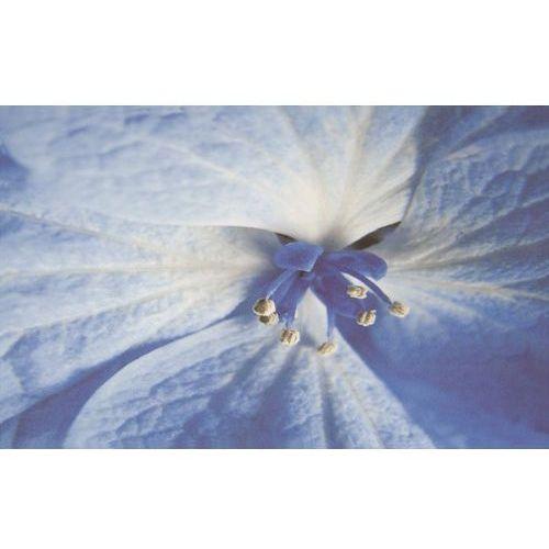 Oferta Acapulco Blue inserto Kwiat 25x40 (glazura i terakota)