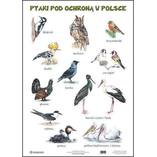 Plansza Ssaki pod ochroną w Polsce Ptaki pod ochroną w Polsce - oferta [2527d3a87fd3750c]