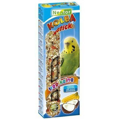 Nestor Kolba Papuga mała owoce tropikalne i kokos, nestor